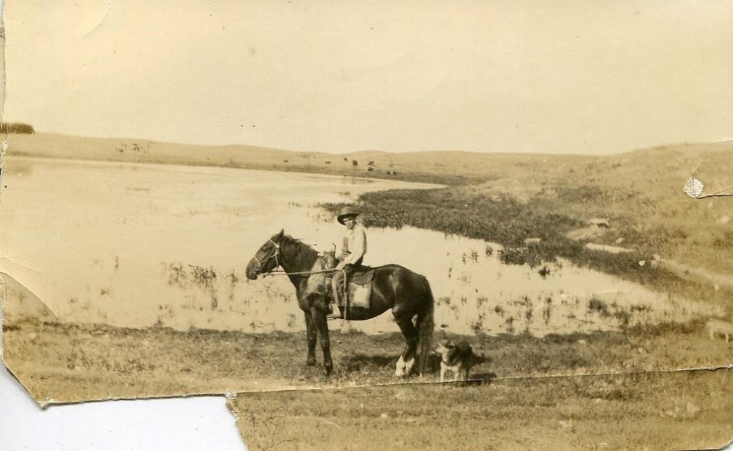 p.pop horse montana